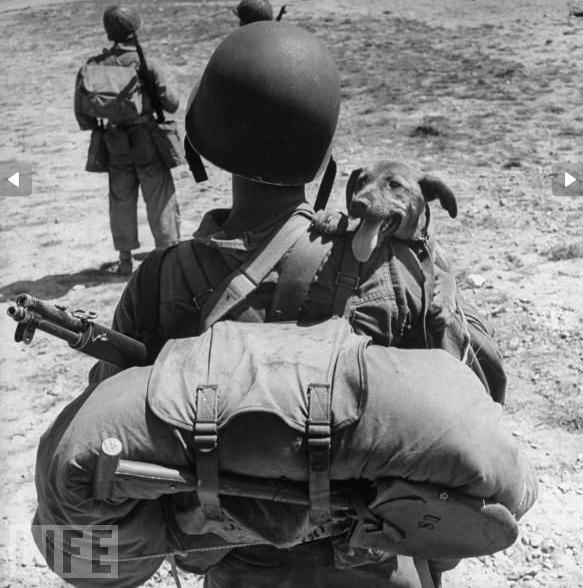 WWII-Dog