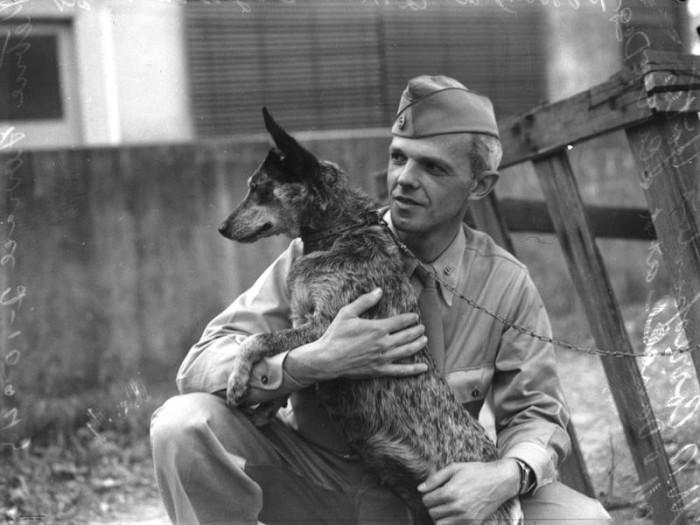 military-dog-1