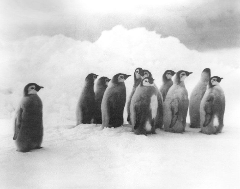 Shackleton3_Hurley.jpg.CROP.original-original