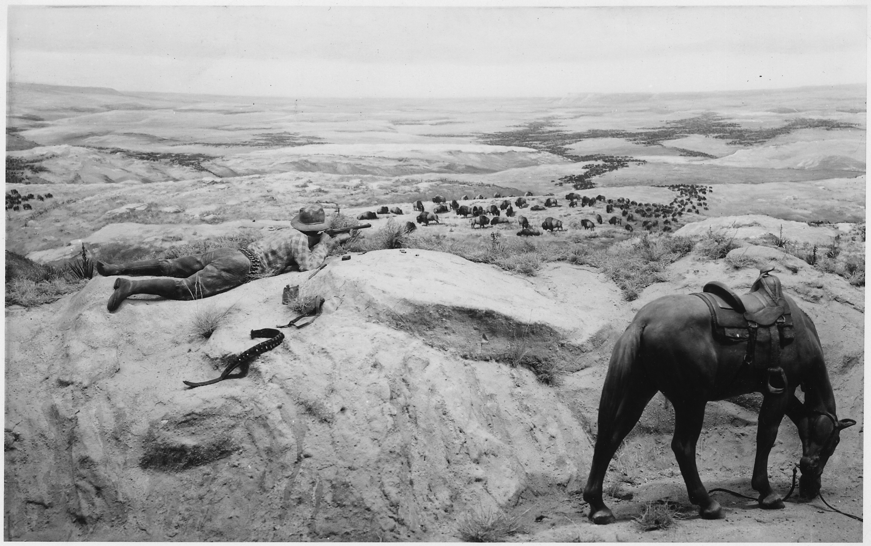 Cowboy_aiming_rifle_at_a_herd_of_buffalo_while_horse_grazes_-_NARA_-_286048