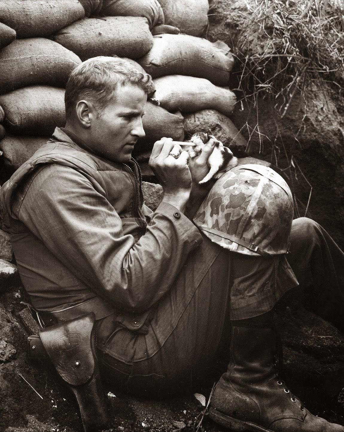 The marine and the kitten, Korean War, 1952 (1)