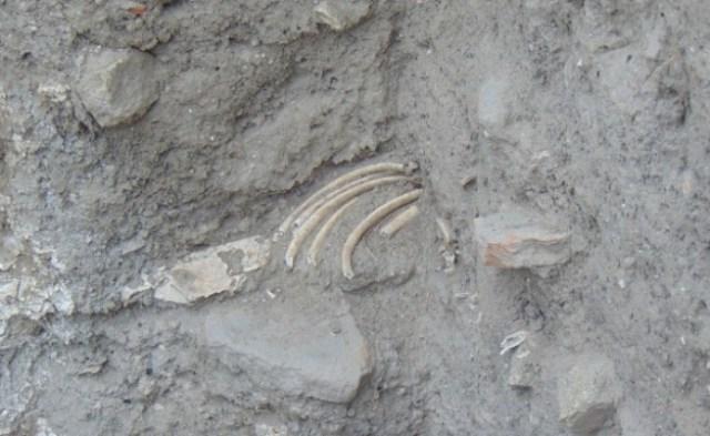 Human remains at Nebet Tepe [PHOTO: archaeologyinbulgaria,com]
