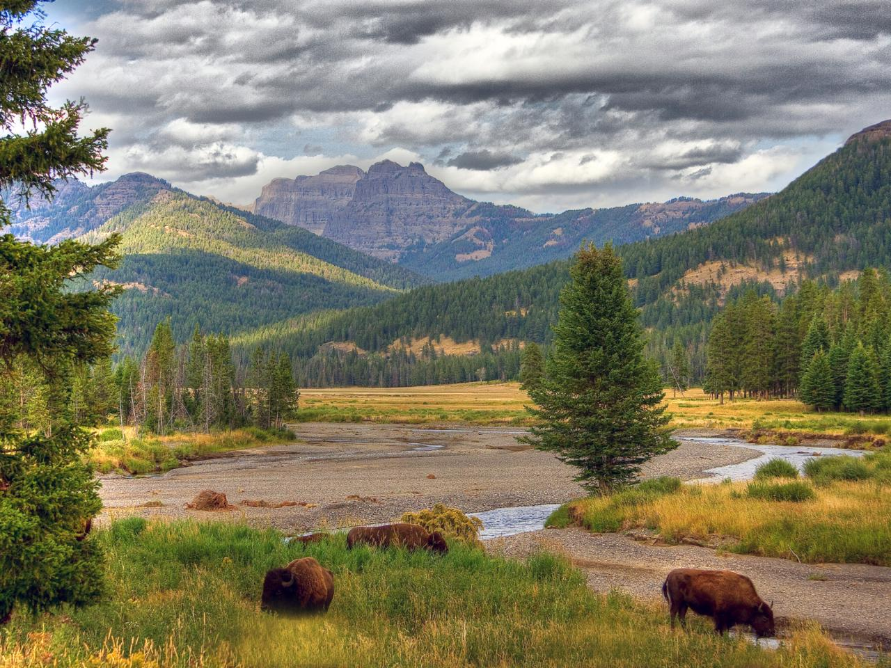 yellowstone national park lesbian singles Posts about gay bhutan tours written by outjourneys  travel guide in india, yellowstone national park 5 comments  singles from surrogacy (ndtvcom.