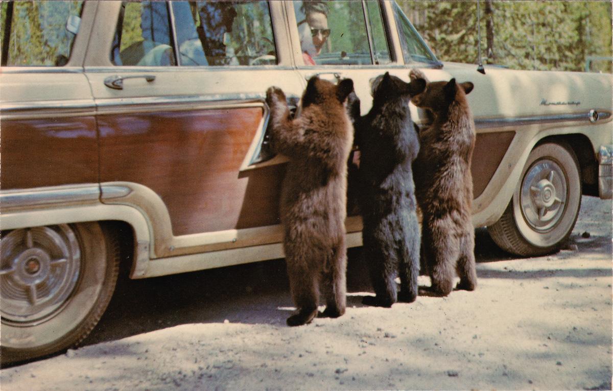 """Hold-Up Bears"" Photo postcarroundup"
