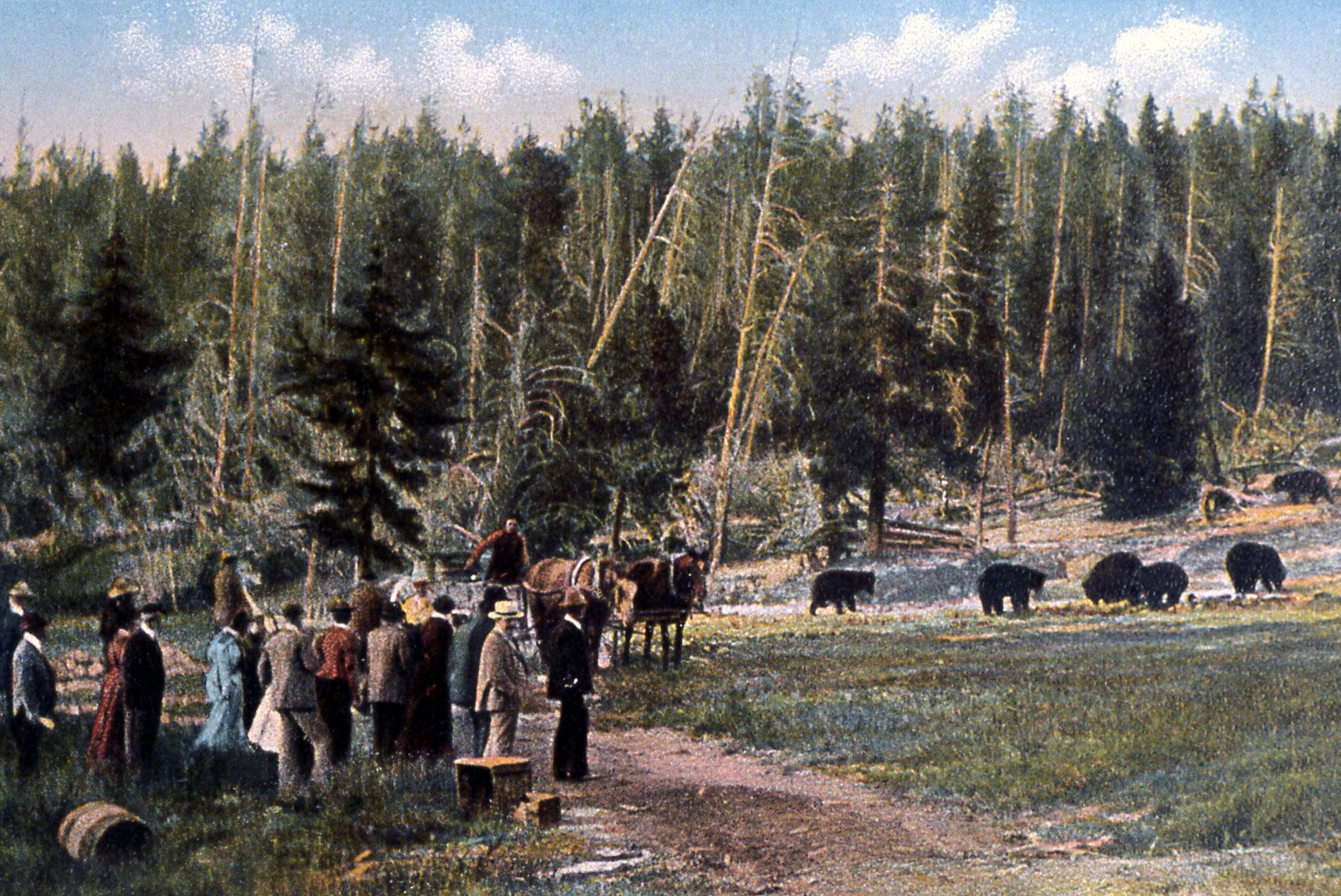 Postcard of the bear feedings Photo: nps