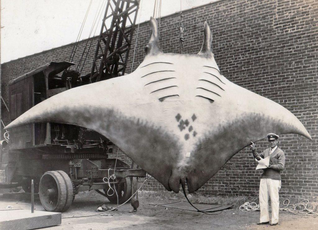 largecatch