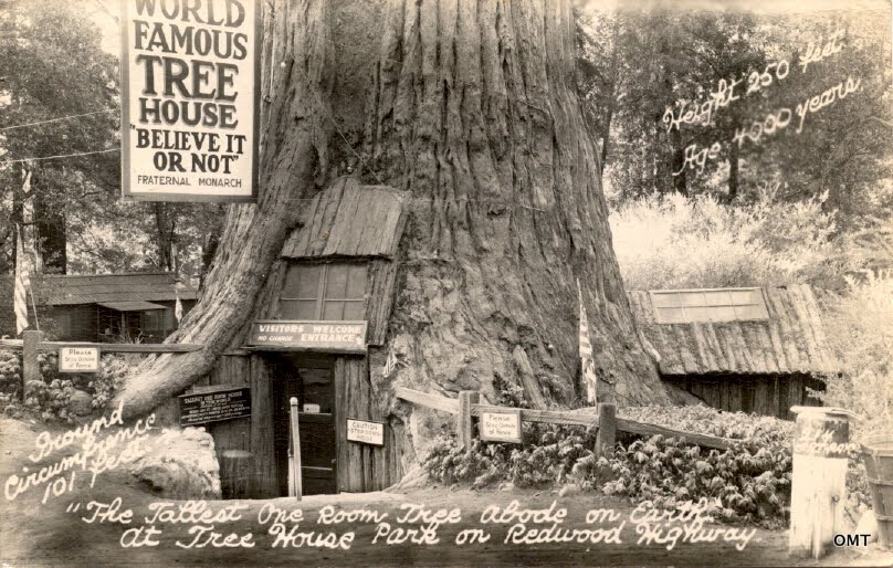 (Stump home in a redwood | source: junkshopsnapshots.blogspot.com)